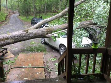 Sarah's tree story