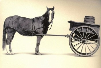cart_before_the_horse_pictures_30991