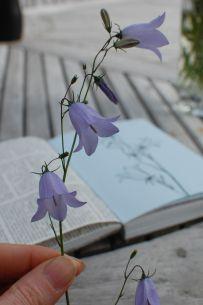 a blog on bluebells