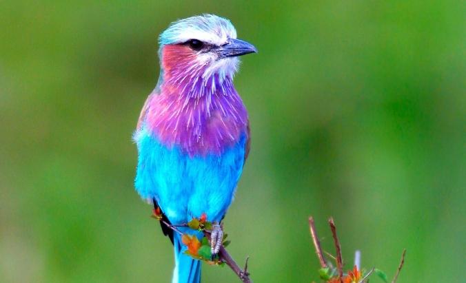 a bird 2