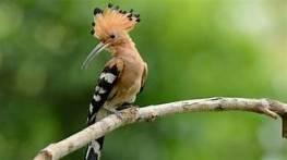 a bird 3