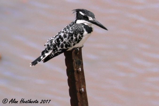 a-bird-blog-1.jpg