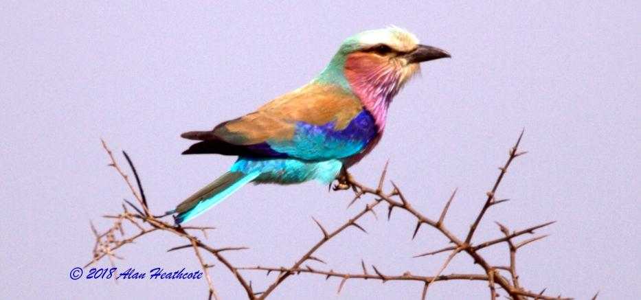 a bird blog 2