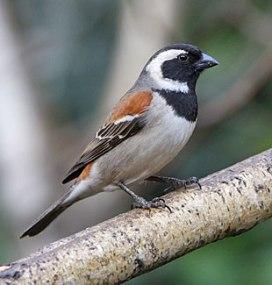 a bird blog 5