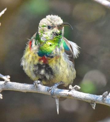 a bird blog 6