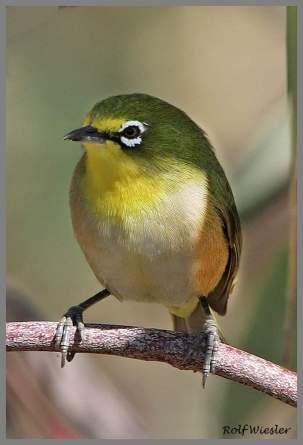 a bird blog 7