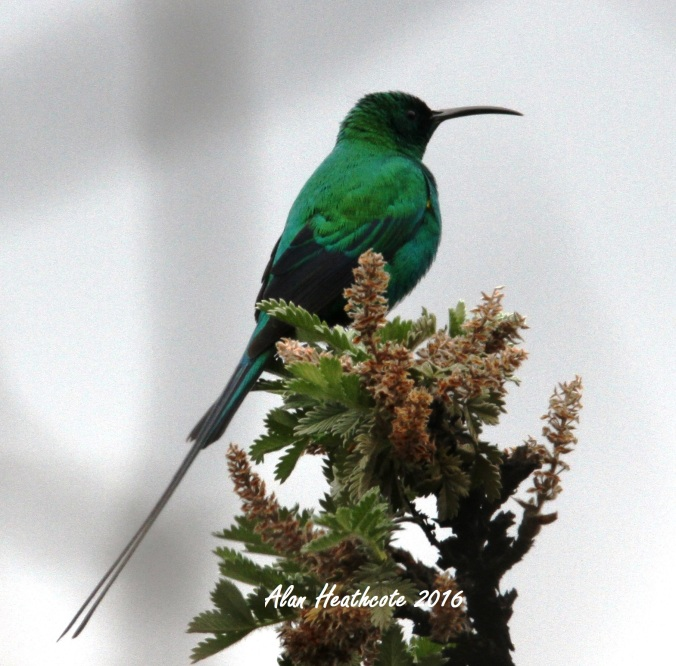 a bird blog