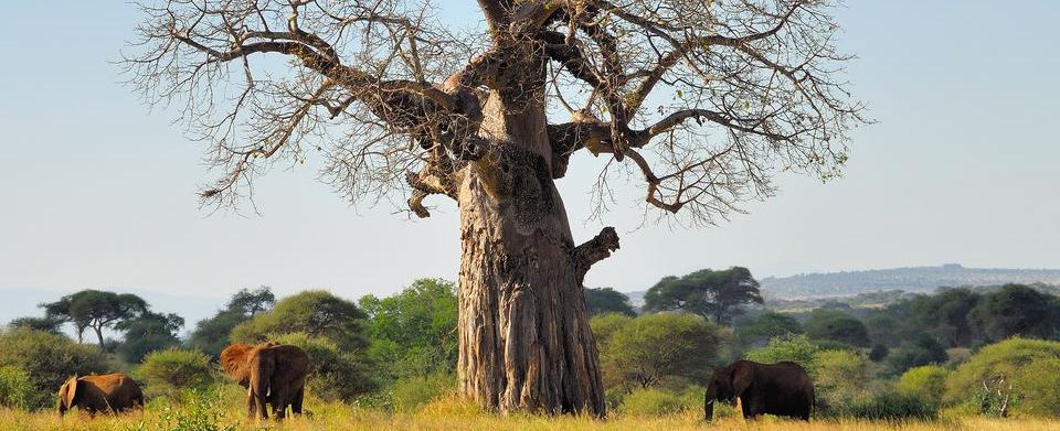 aaa tree blog2